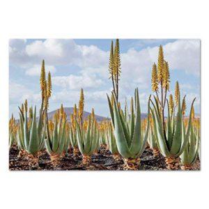 The picture of aloe vera plants.