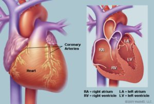 The pictures of heart illustrating the outer image, and the image in half.