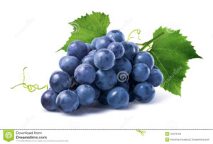 The wonderful picture of grapes illustrated still on a vine.